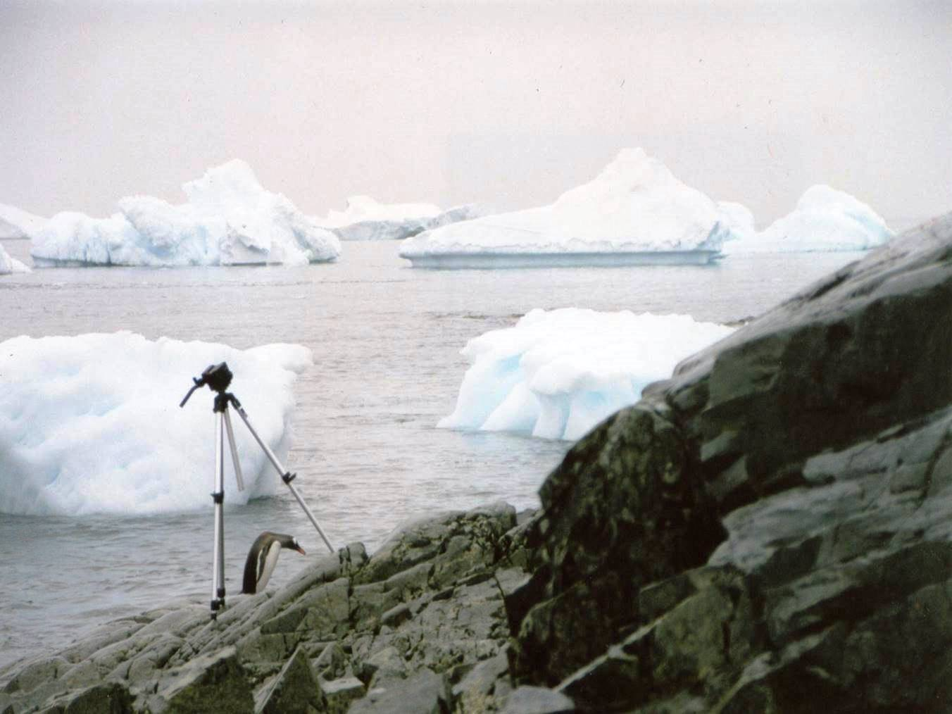 penguin camera - Copy