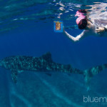 ningaloo cdvwithbook