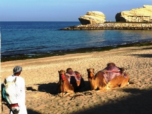 Oman 2015 camera Shangrila P1140181 (25) - Copy