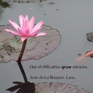 Page 25 -lotus grow miracles